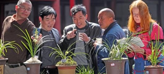 杭州富阳:共赴兰花之约