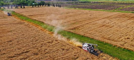 双浦镇再现金色麦浪 4300亩小麦开始收割