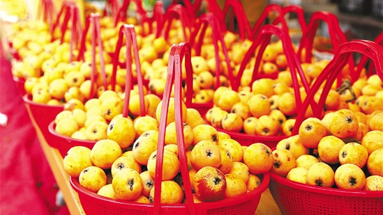 Loquat season is coming! Feast on the furry, sweet-tart fruit at Tangqi Loquat Festival!