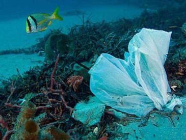 """外賣叫多了,""""限塑令""""尷尬了 三大外賣平臺一年至少消耗73億個塑料袋"""