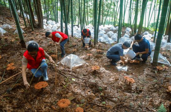 淳安:林业服务队汛期后助农忙―