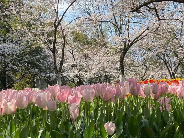 4月20日起游杭州太子湾无需预约公园旅游旺季数据同步出炉