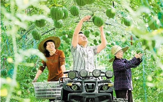 西瓜空中养 收益噌噌涨