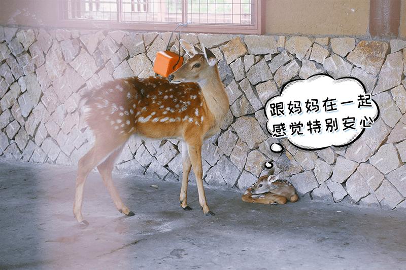 """""""我这么可爱,怎么还没有名字?""""出生一周,良渚古城""""网红""""鹿宝宝征名啦"""