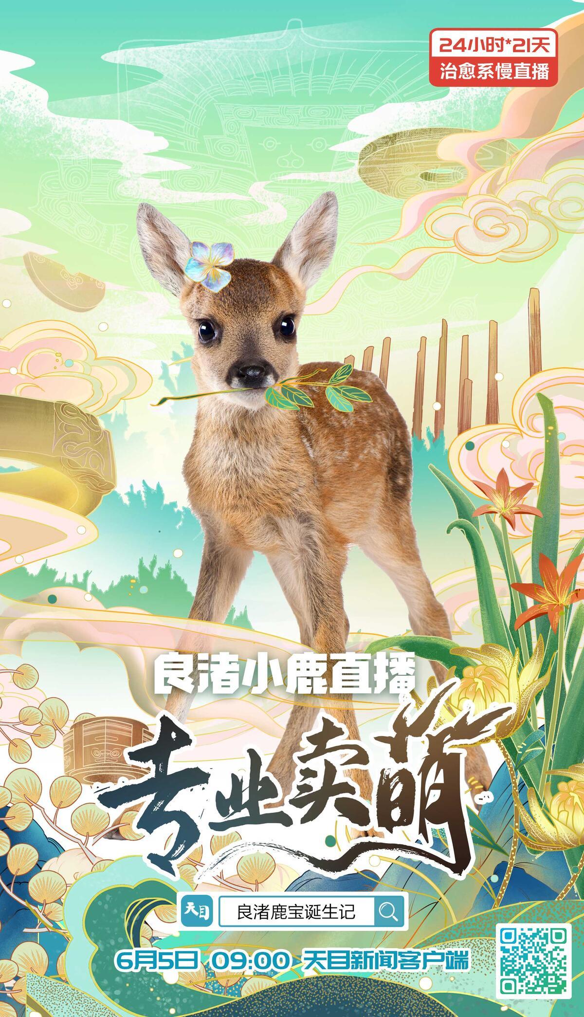 24小时慢直播:良渚小鹿今天在干嘛 ?看一眼,萌到你心化