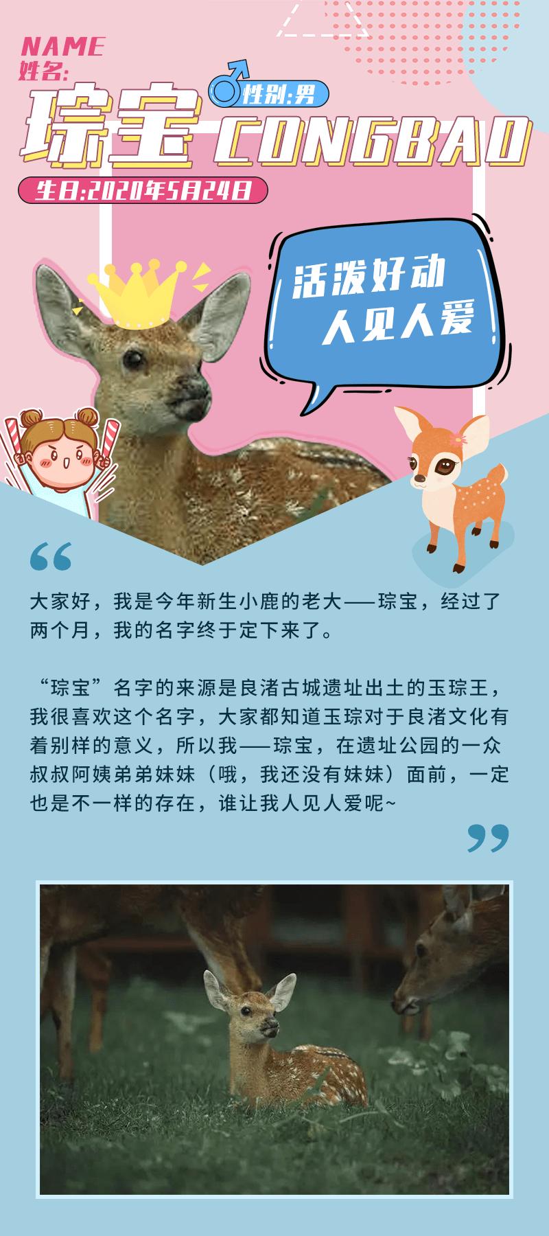 """琮宝、圆宝、桃宝……良渚古城四只新生的""""网红""""小鹿都有名字啦!"""