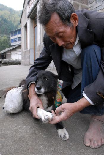 色狗与人弄的直流水_一只狗驮着两塑料袋的东西,后面跟着一位老人,狗会帮人背东西呢!