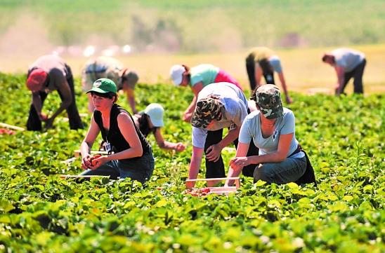 浙江休闲农业与乡村旅游:看那片魅力乡野