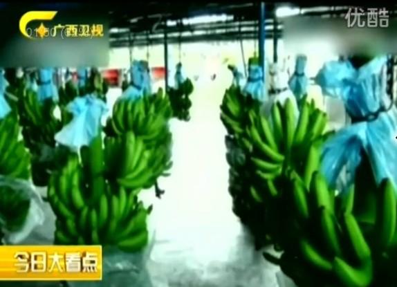 菲律宾香蕉损失上亿元 官员访华求情