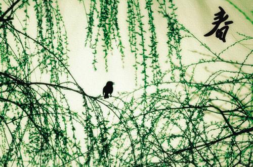 春天来了,柳叶都冒芽了.柳树上停着一只小鸟,春天真的来啦.图片