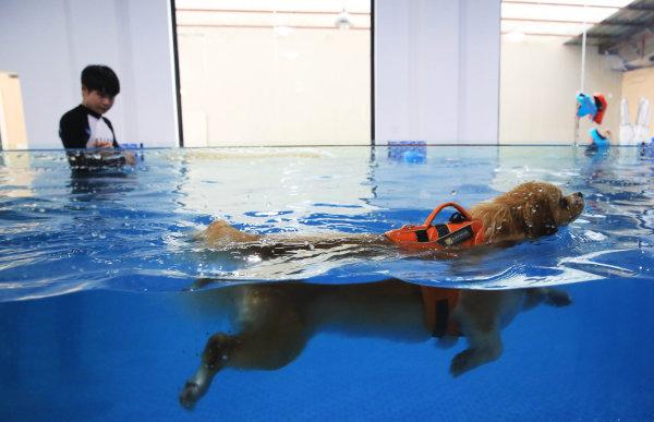 杭州一宠物游泳池火了!狗狗208元游一次