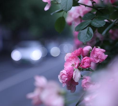 杭州这道风景连本地司机都直呼太美