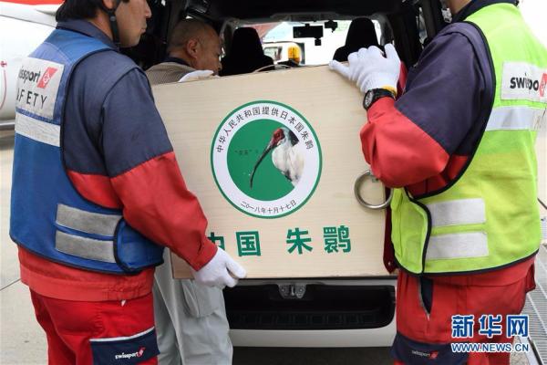 中国提供的一对朱鹮抵达日本