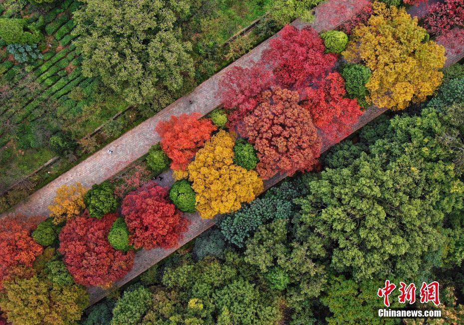 南京紫金山迎来最美季