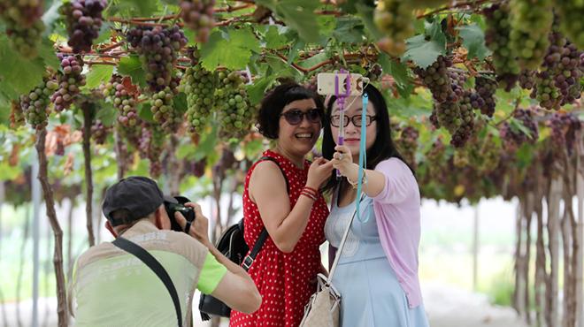 富阳东洲岛开启乡村游新模式