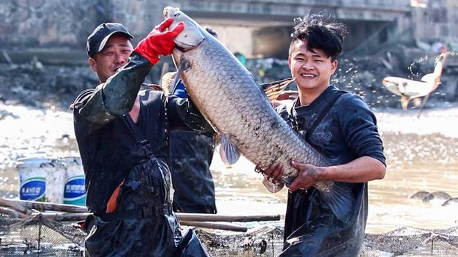 长兴:打年鱼 庆丰收