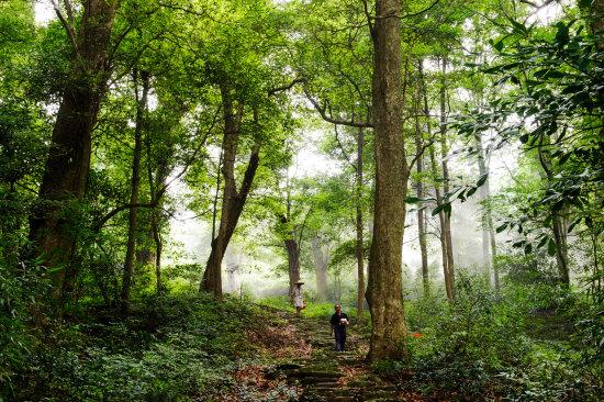 开化为4700余株古树名木投保公众责任险