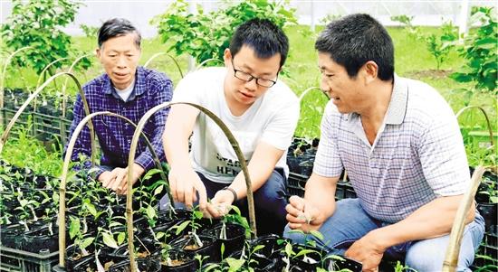 """临海柑橘产业引才 """"嫁接""""全国智力 培育甜蜜产业"""