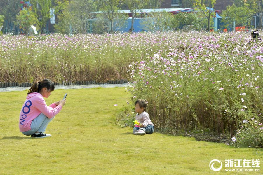 旧村变景区 杭州这里还有一大片花海 请一定珍惜