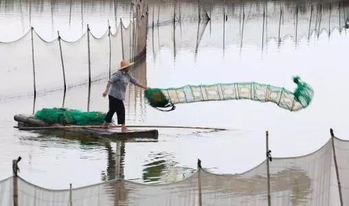 """一场台风 让这个县收获了价值40多亿元的""""宝""""!"""