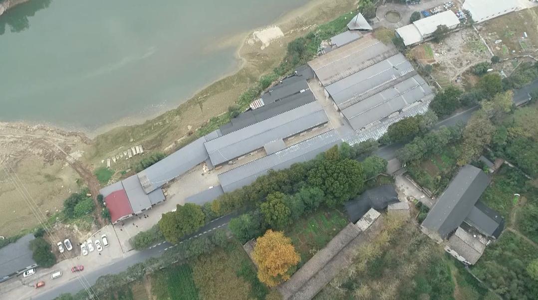 松阳:林业局出租地块出现大体量违建