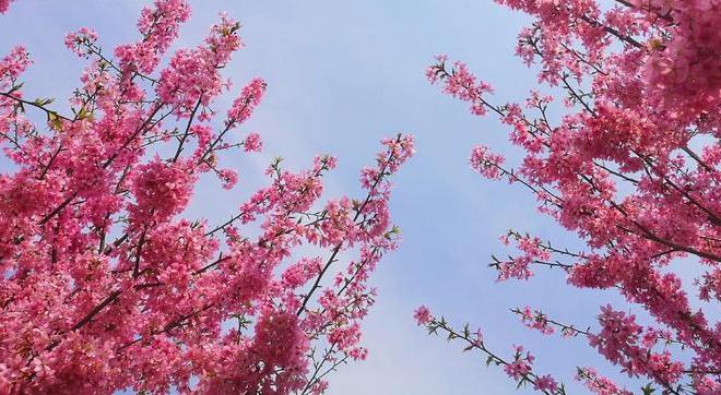 台州相册|三月踏青,不负春光与时行