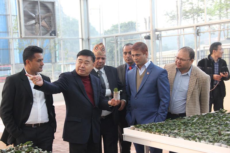 """以""""茶""""为媒迈向国际舞台 尼泊尔考察团川茶考察"""