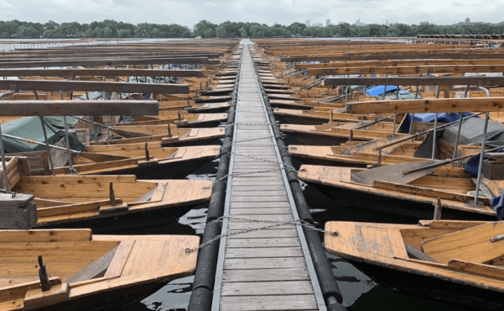 西湖游船、西溪湿地游船暂时停航