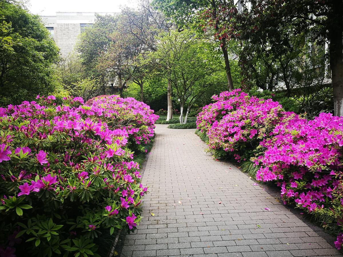 人间四月芳菲尽,杜鹃花开红满城,这样的禾城你爱了吗?