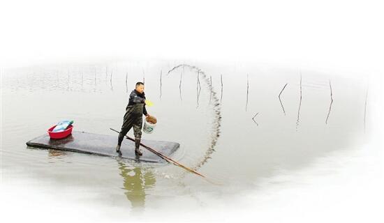 木筏晃呀晃,记者在三门海涂跟着师傅撒蛏苗