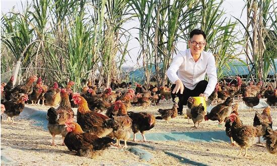 廖文彦在饲喂土鸡。 受访者供图