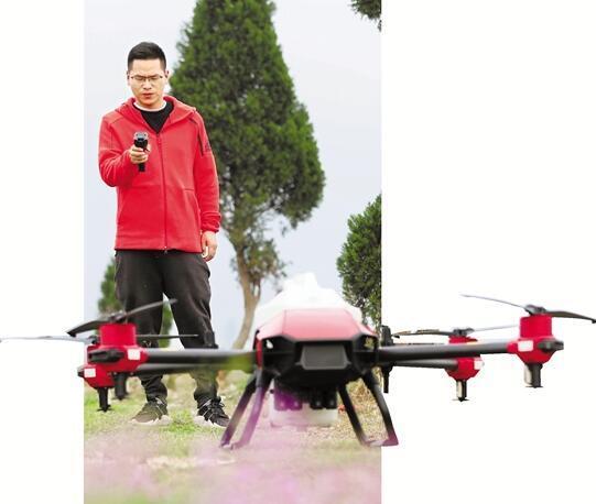 2020年3月26日,瑞安市马屿镇,源田家庭农场负责人项贤治在田埂边操控农用无人机喷洒农药。