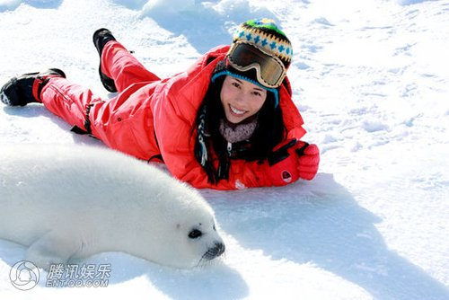 莫文蔚关爱动物 不惧雪地严寒贴近海豹