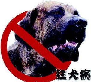 中国狂犬病死亡数居全球第二 - 大森林 - 大森林理财