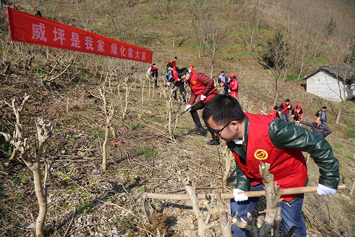 【威坪镇小城镇整治随手拍】威坪青年志愿者植树造林,引领绿色标杆