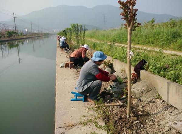 小城镇中的园林绿化提升工程都靠着这些勤勤恳恳的劳动者,他们用勤劳的双手打造着我们美丽的桃花镇,不仅植树造林,更是种草养花,让桃花镇的乡容镇貌更上一层楼。