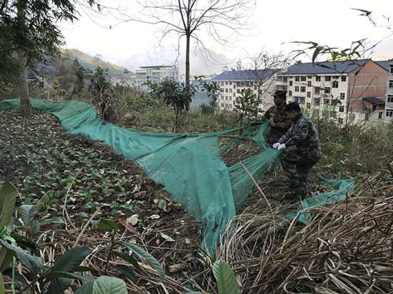 副镇长徐枞均与同事协力拆除乱围菜地网。