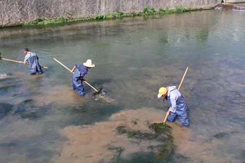 临安高虹河道清理。