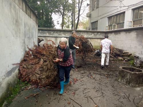 农村老党员助力集镇环境卫生整治。
