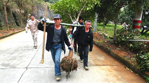 乐清市岭底乡南充村村民自发组织绿化沿村道路两旁。